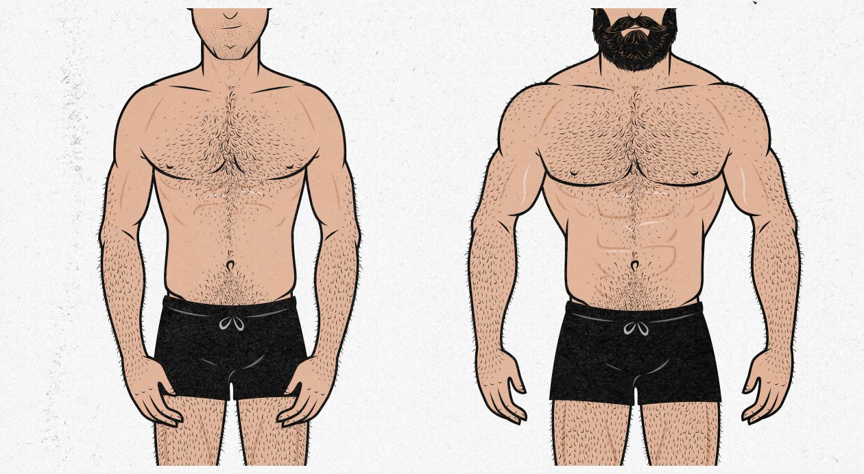 Bony to Beastly—Ectomorph Aesthetics: The Science of Building an