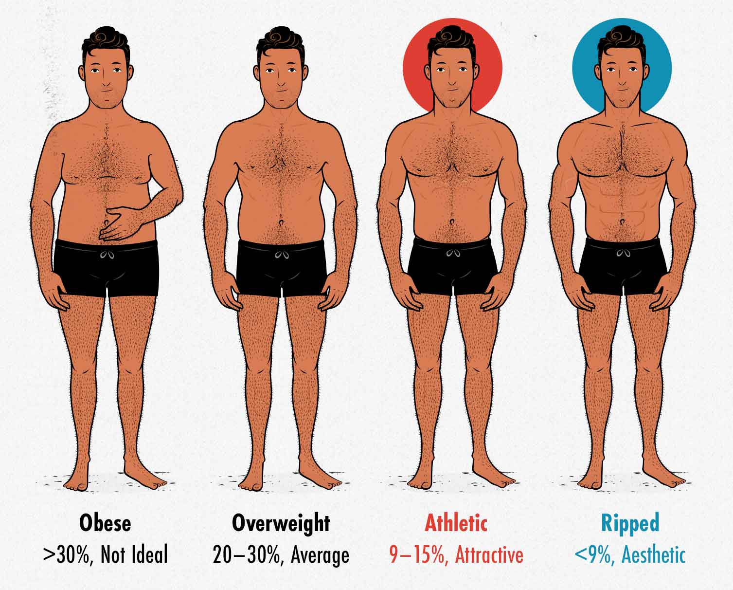 Diagram showing the most attractive and aesthetic male body-fat percentages.