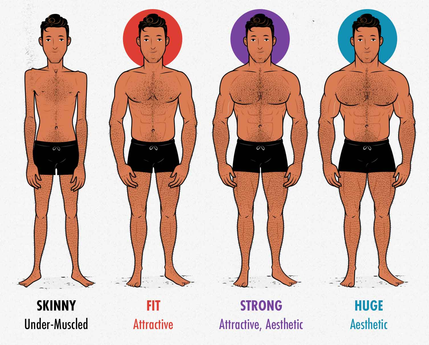 Diagram showing male muscularity and how it affects our attractiveness and aesthetics.