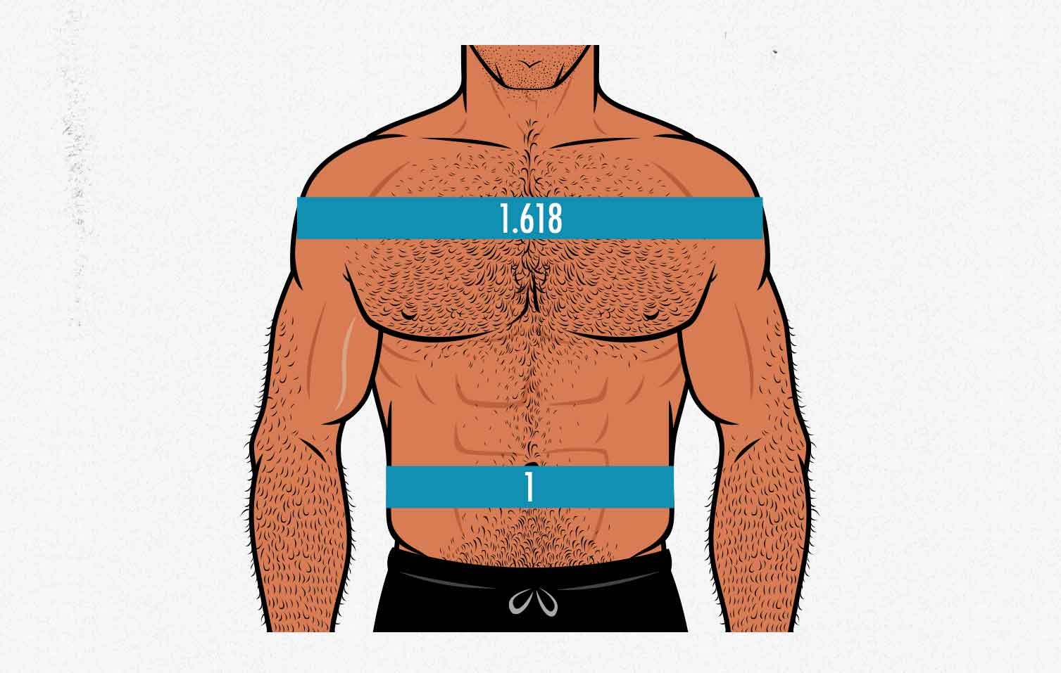 Diagram showing how to measure the ideal shoulder-to-waist ratio for men.