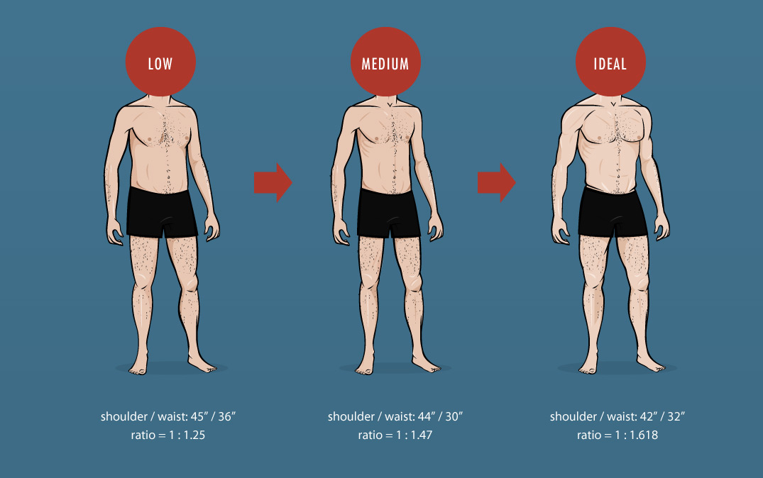 The Ideal Male Body Weight Chart Shoulder Waist Ratio Big Bony To