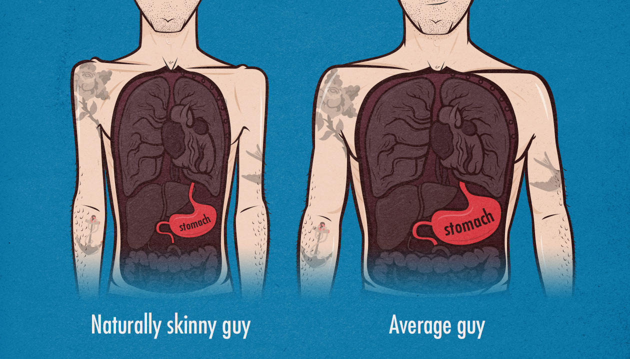 Skinny guys, ectomorphs and hardgainers have smaller stomach sizes, making it harder to eat more calories.