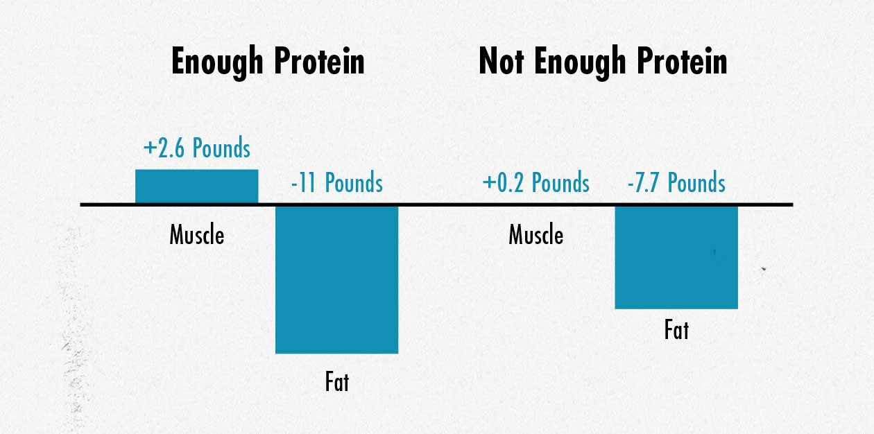 Graph showing simultaneous muscle growth and fat loss when training is combined with sufficient protein intake.