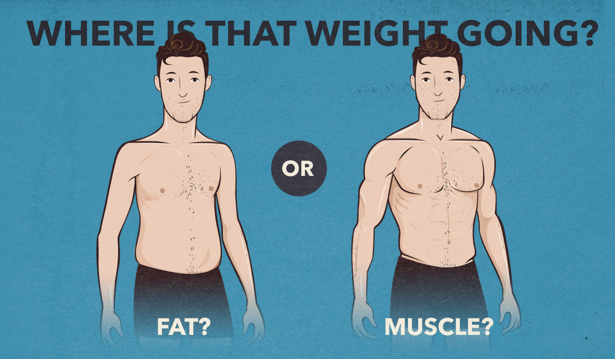 weight-gain-muscle-building-fat-gain-how-to-stop-fat