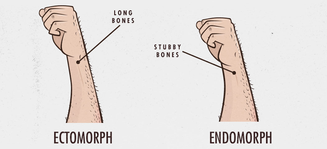 Body Type Question: Wrist Thickness in Ectomorphs and Endomorphs