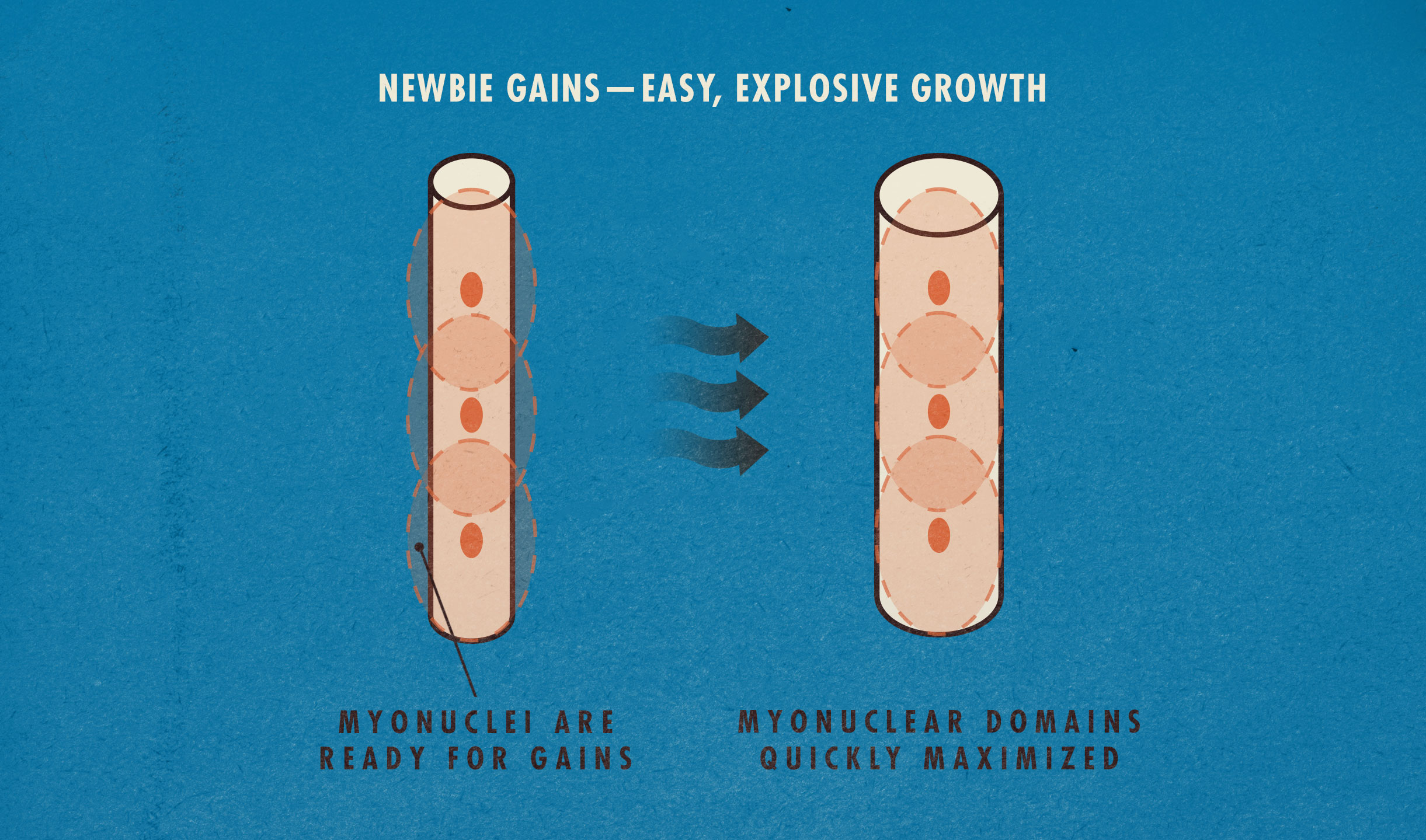 Newbie Gains Diagram