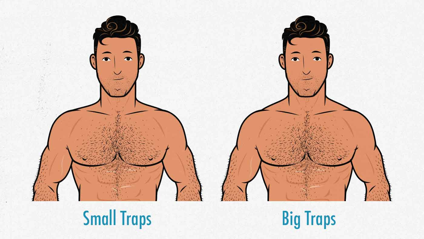 Comparison of a man with small vs big trap muscles.