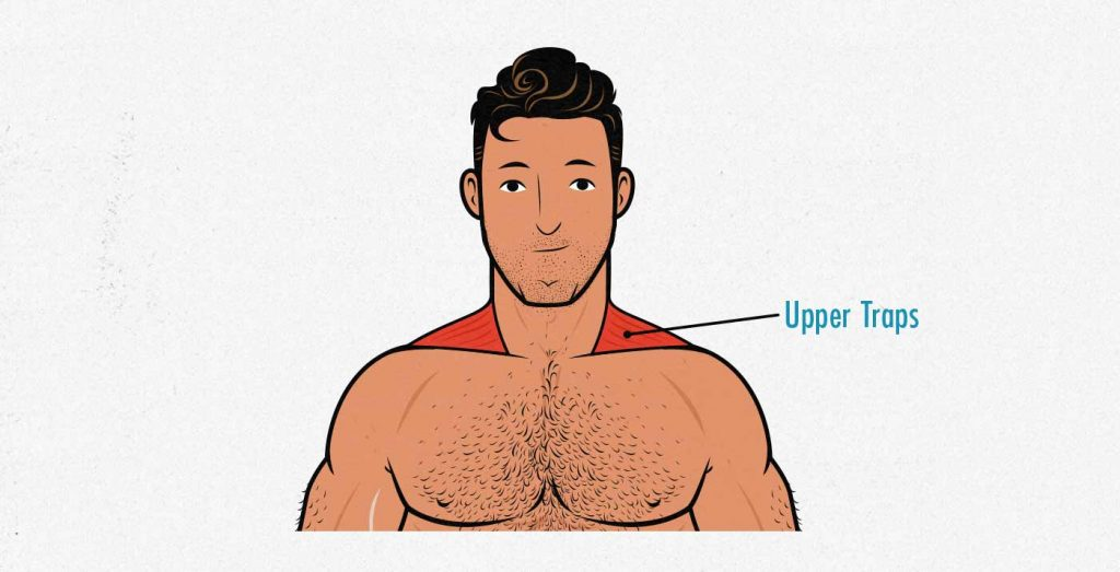 Illustration of the upper trap muscles.