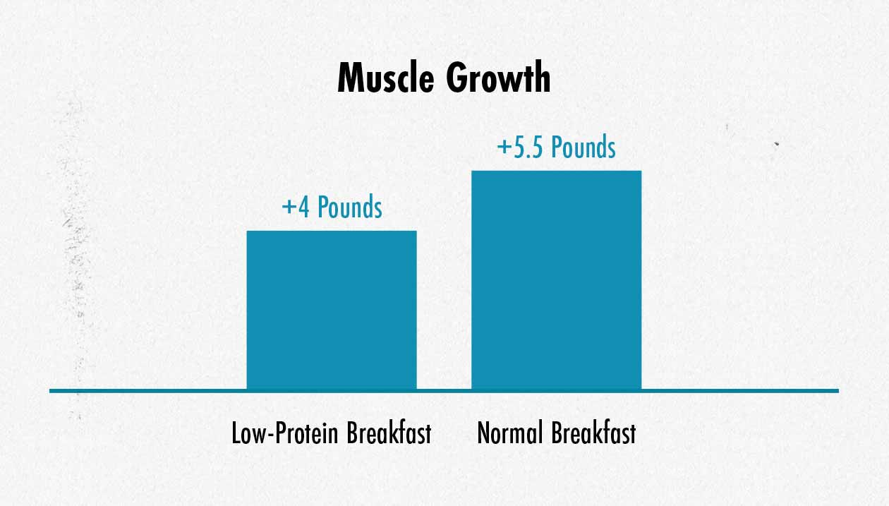 Graph showing differences in muscle growth with intermittent fasting versus regular protein distribution.