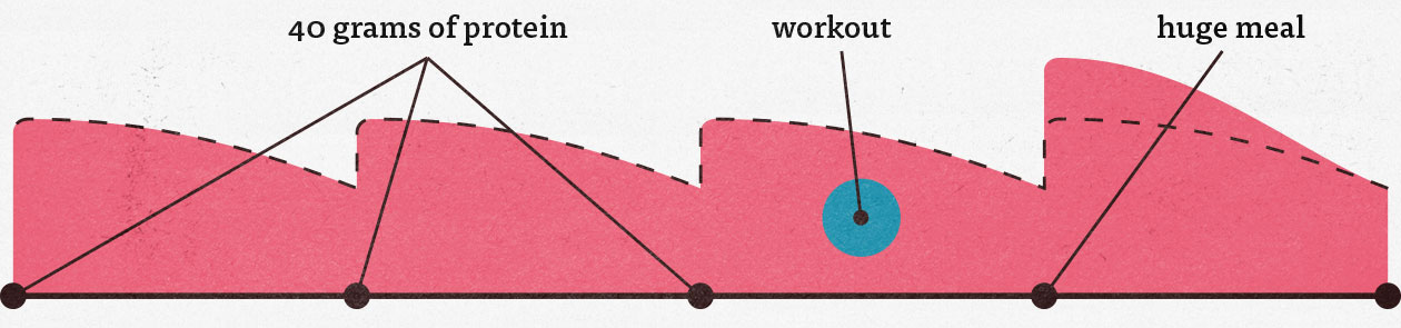 Graph showing ideal protein distribution for muscle growth.