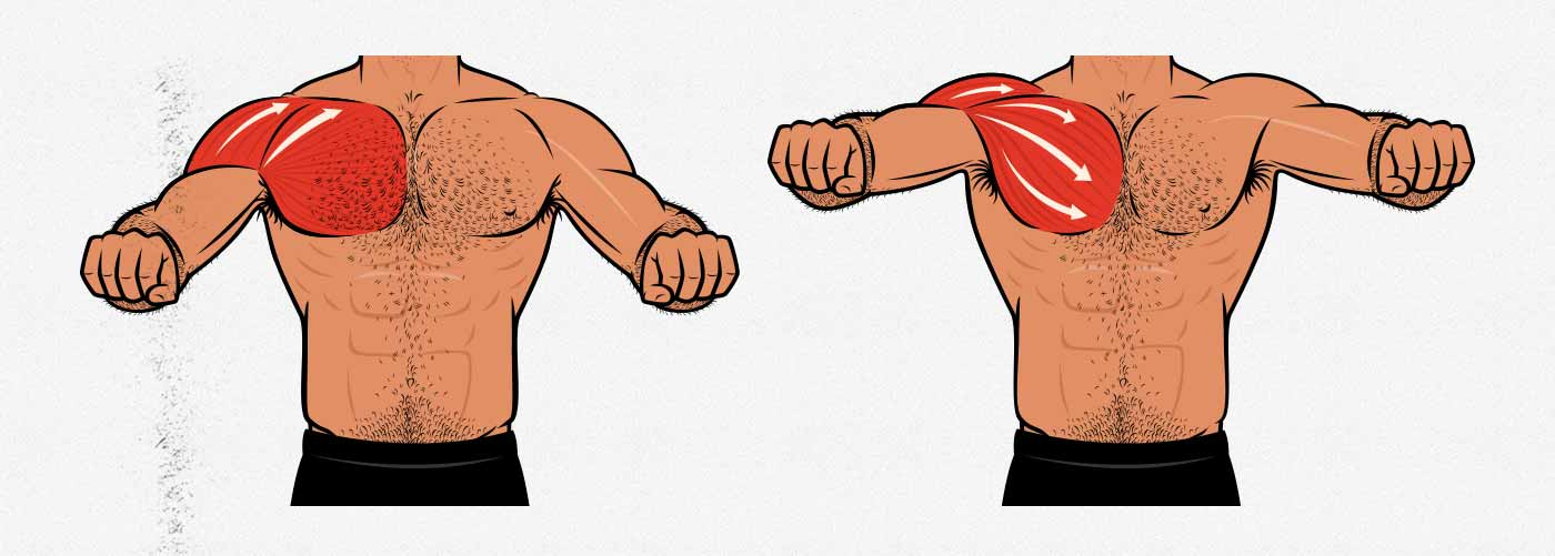 Diagram showing how to prioritize chest over shoulder growth when doing the bench press.
