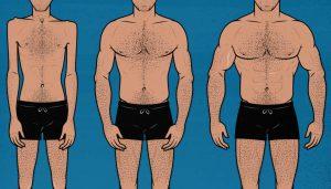 Illustration of a beginner, intermediate, and advanced bodybuilder lifter