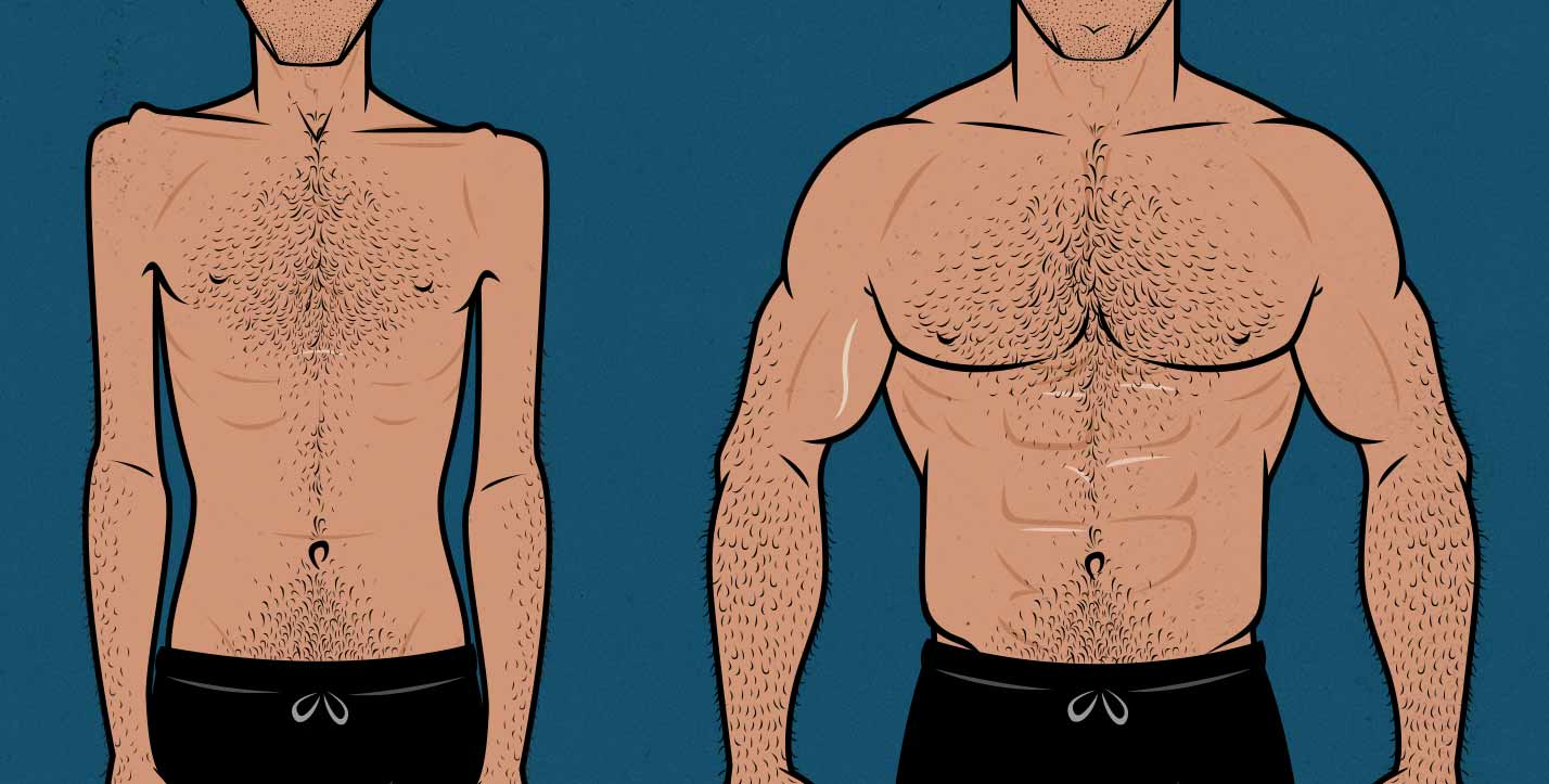 Illustration of an ectomorph bulking up, going from skinny to muscular