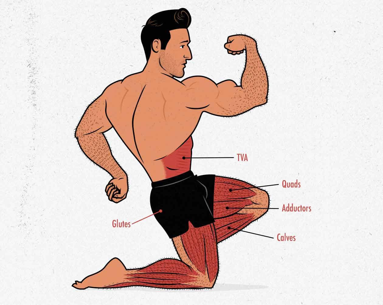 Illustration of the muscles worked with the low-bar and high-bar back squat.