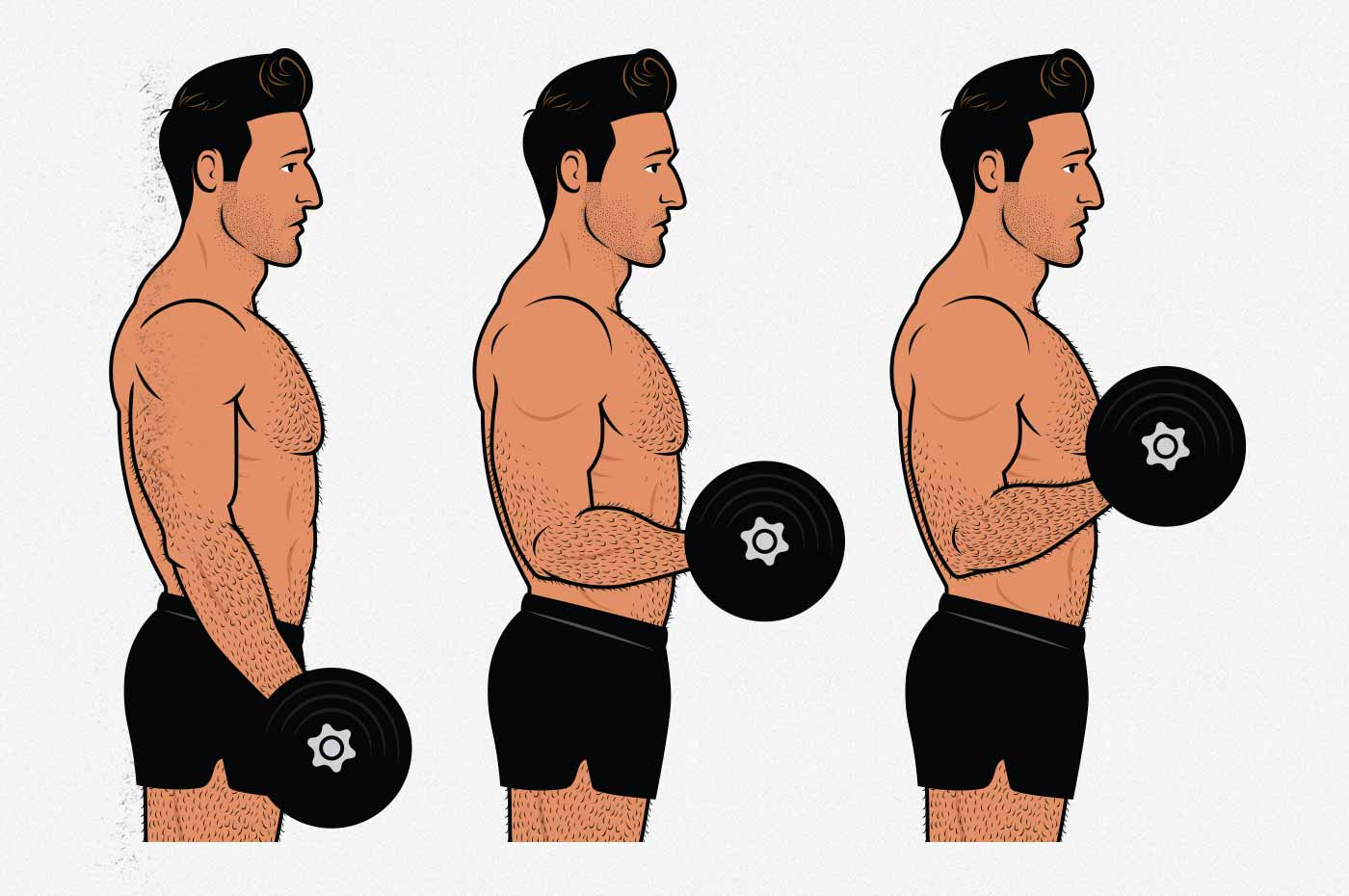 Illustration of a man doing a dumbbell biceps curl.
