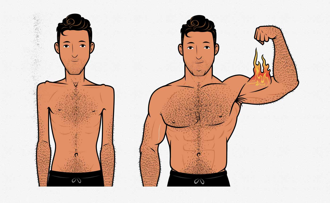Illustration of a skinny hardgainer building muscle and becoming muscular (before/after).