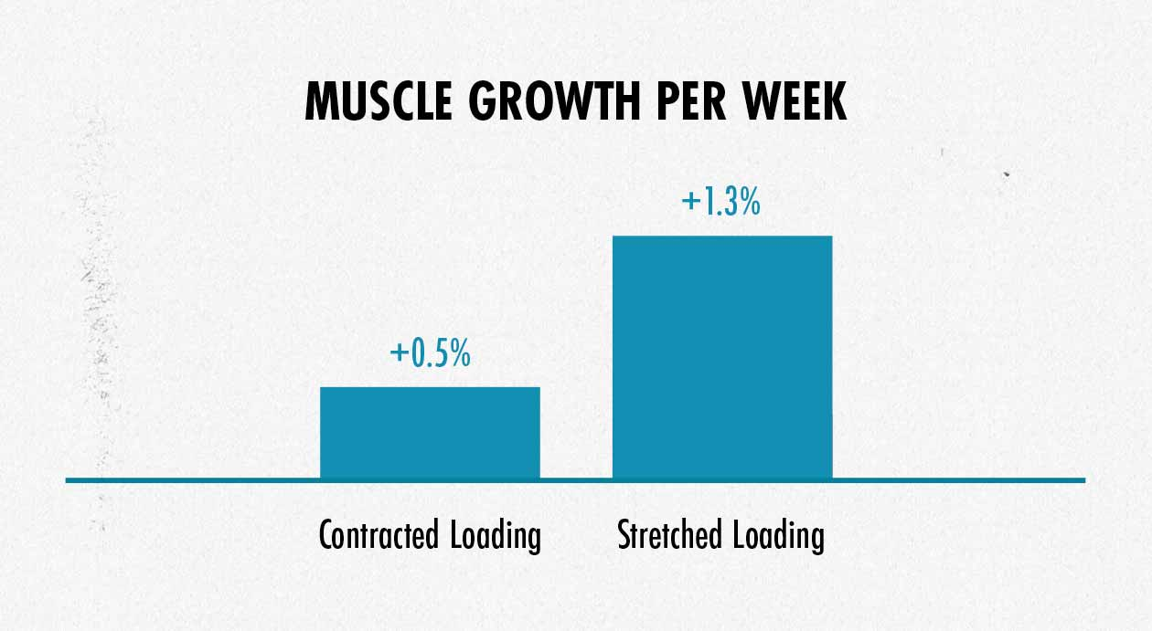 Graph showing the difference in muscle growth when training with long and short muscles lengths.