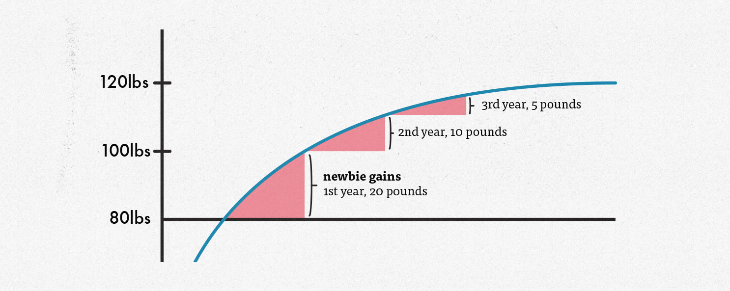 Diagram showing how fast the average person can gain muscle mass, giving us an idea of how quickly we should gain weight during a lean bulk.