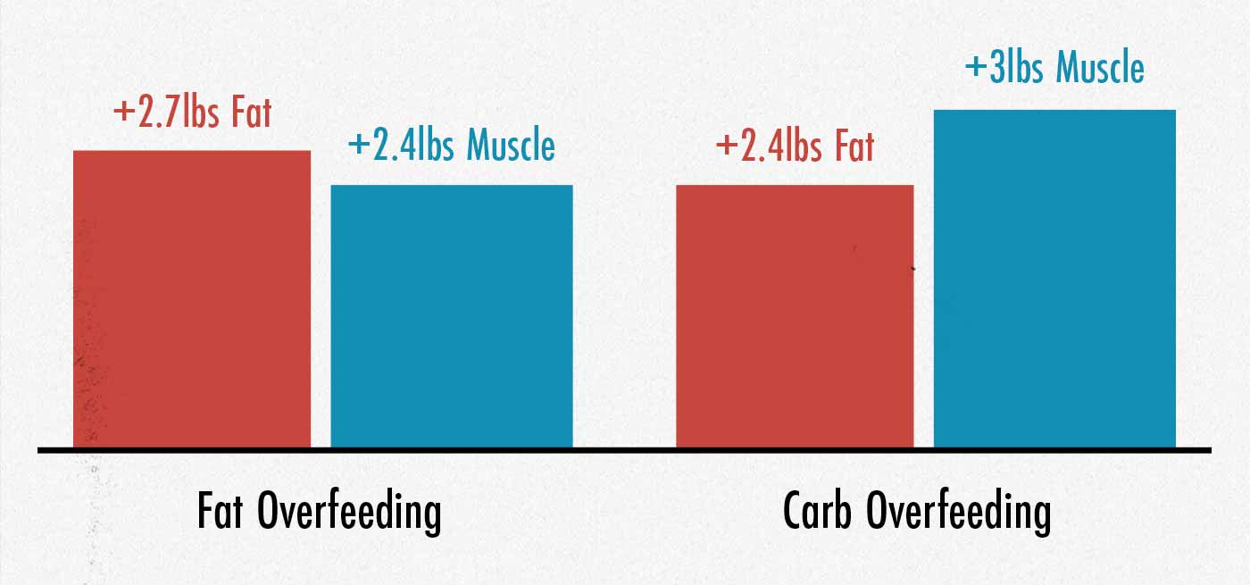Graph showing muscle growth and fat storage while bulking on carbs or fat.