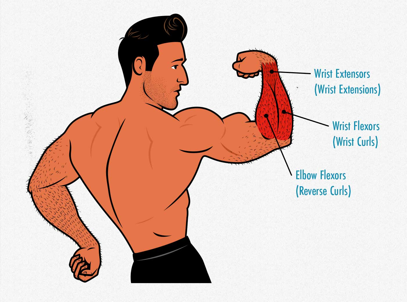 Illustration of a man flexing his forearm muscles.