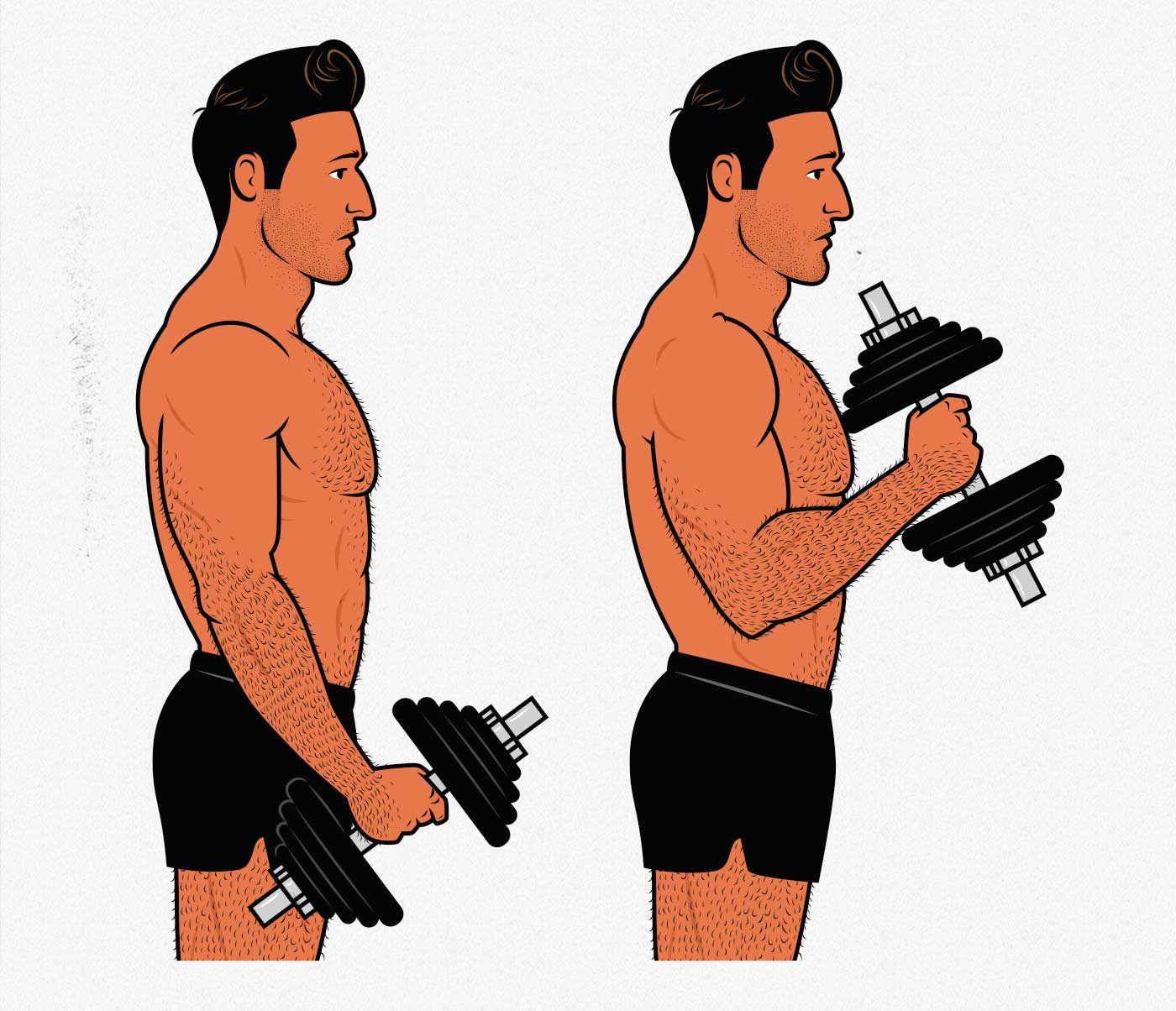 Illustration of a bodybuilder showing us how to do hammer curls to get bigger forearms.