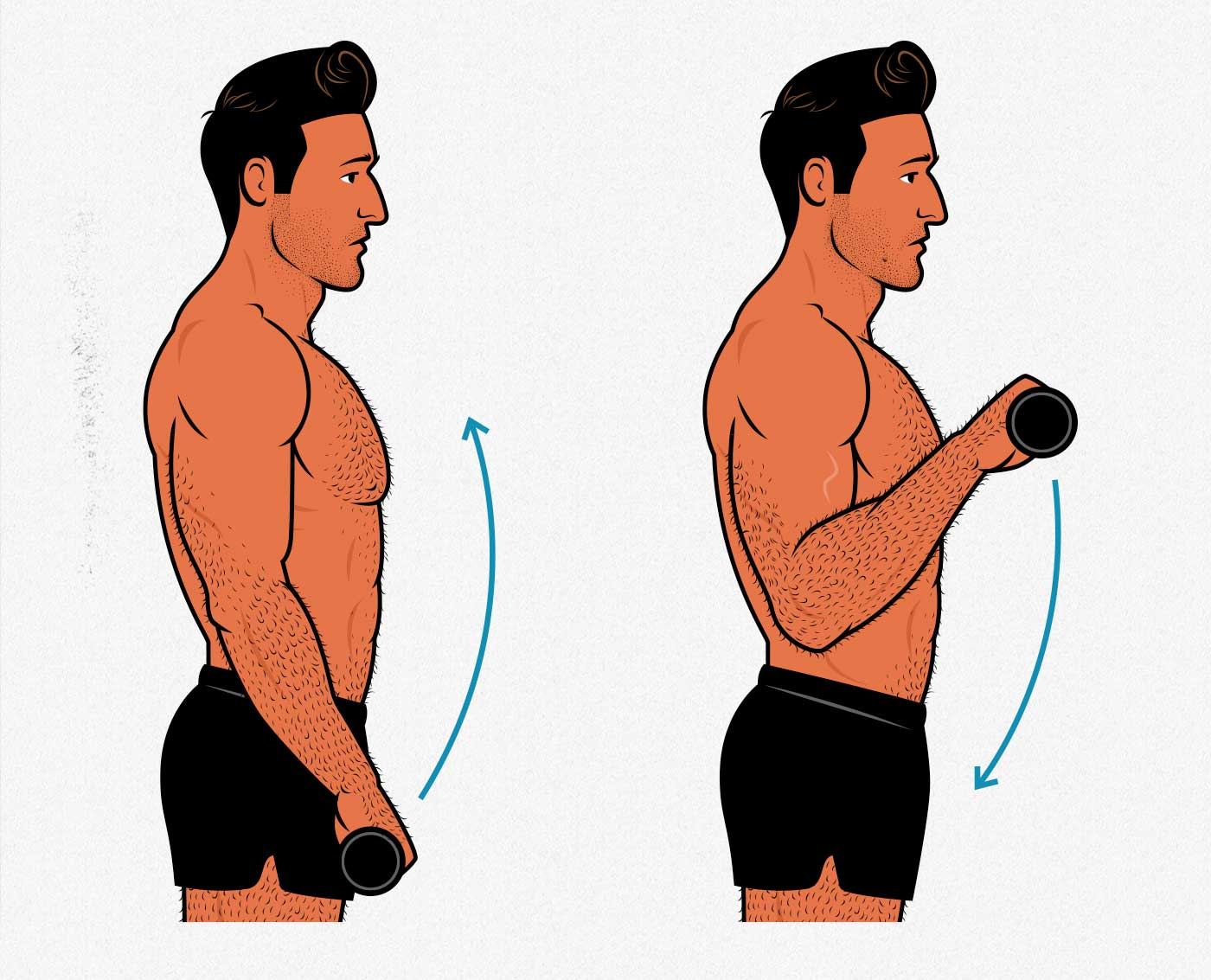 Illustration of a bodybuilder doing reverse curls to get bigger forearms.