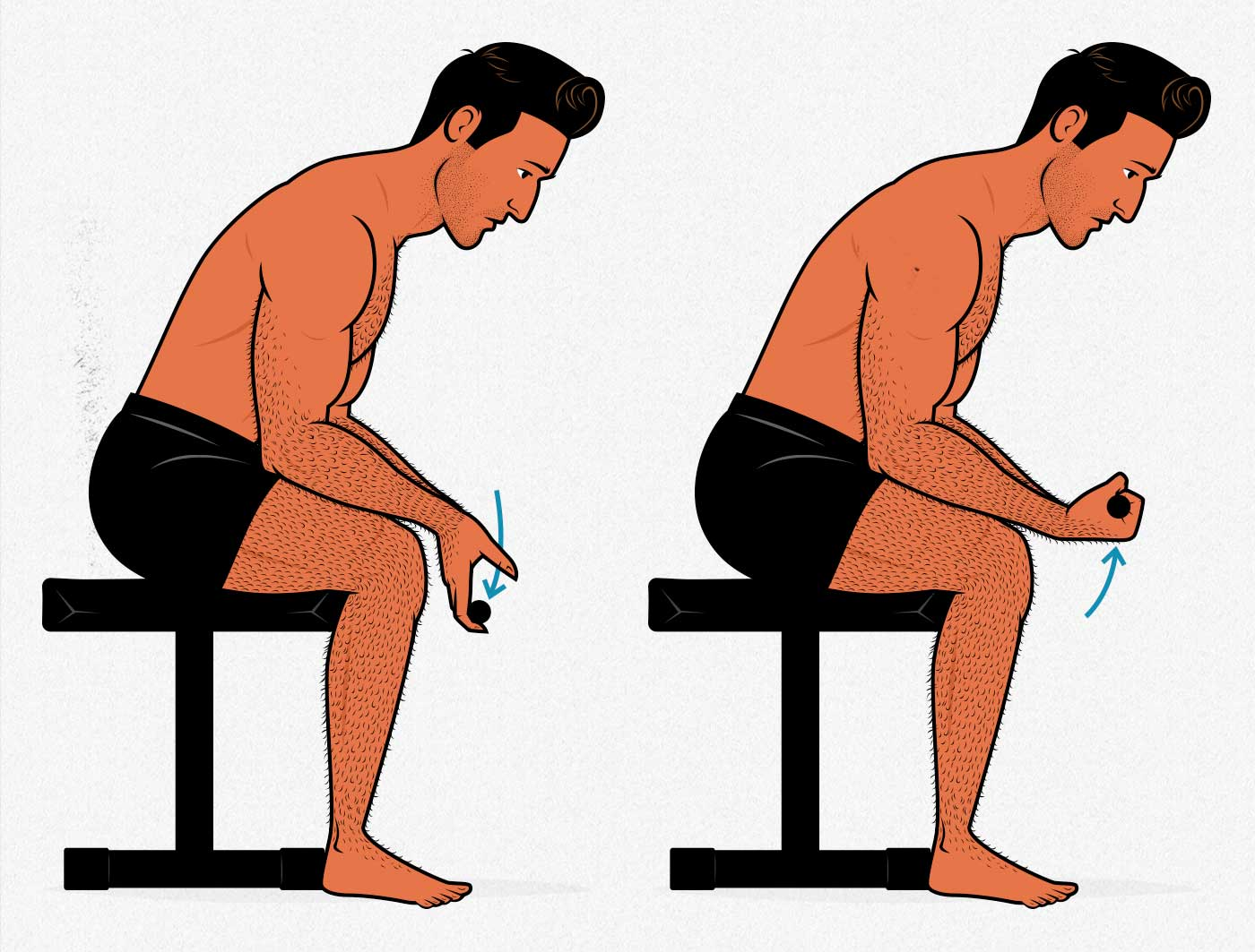 Illustration of a bodybuilder showing how to do the seated wrist curl exercise to build bigger forearms.