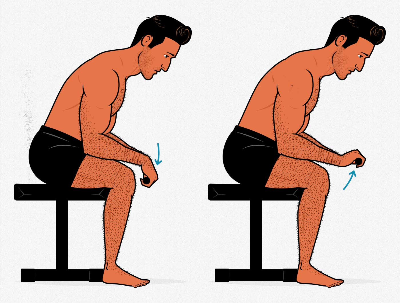 Illustration of a man showing how to do the seated wrist extension exercise to build bigger forearms.