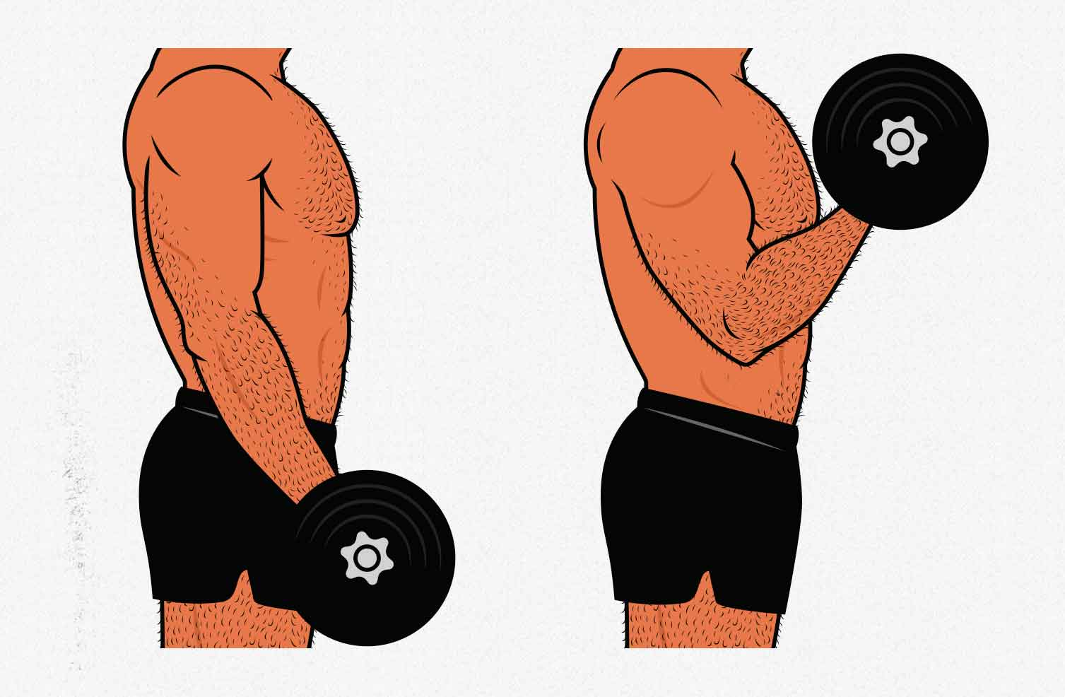 Illustration showing how to do dumbbell biceps curls.