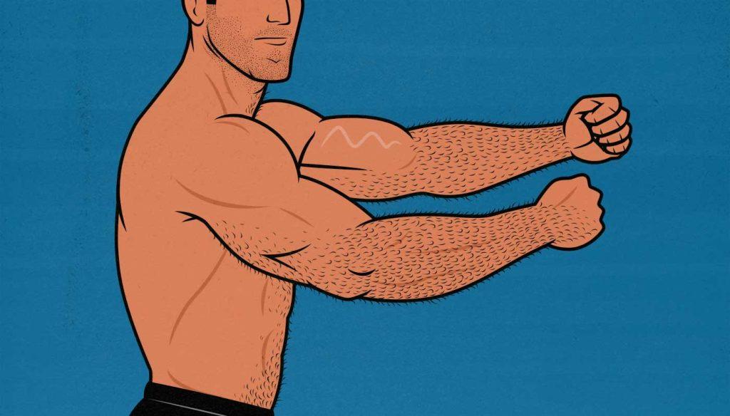 Illustration of a bodybuilder building bigger arms.