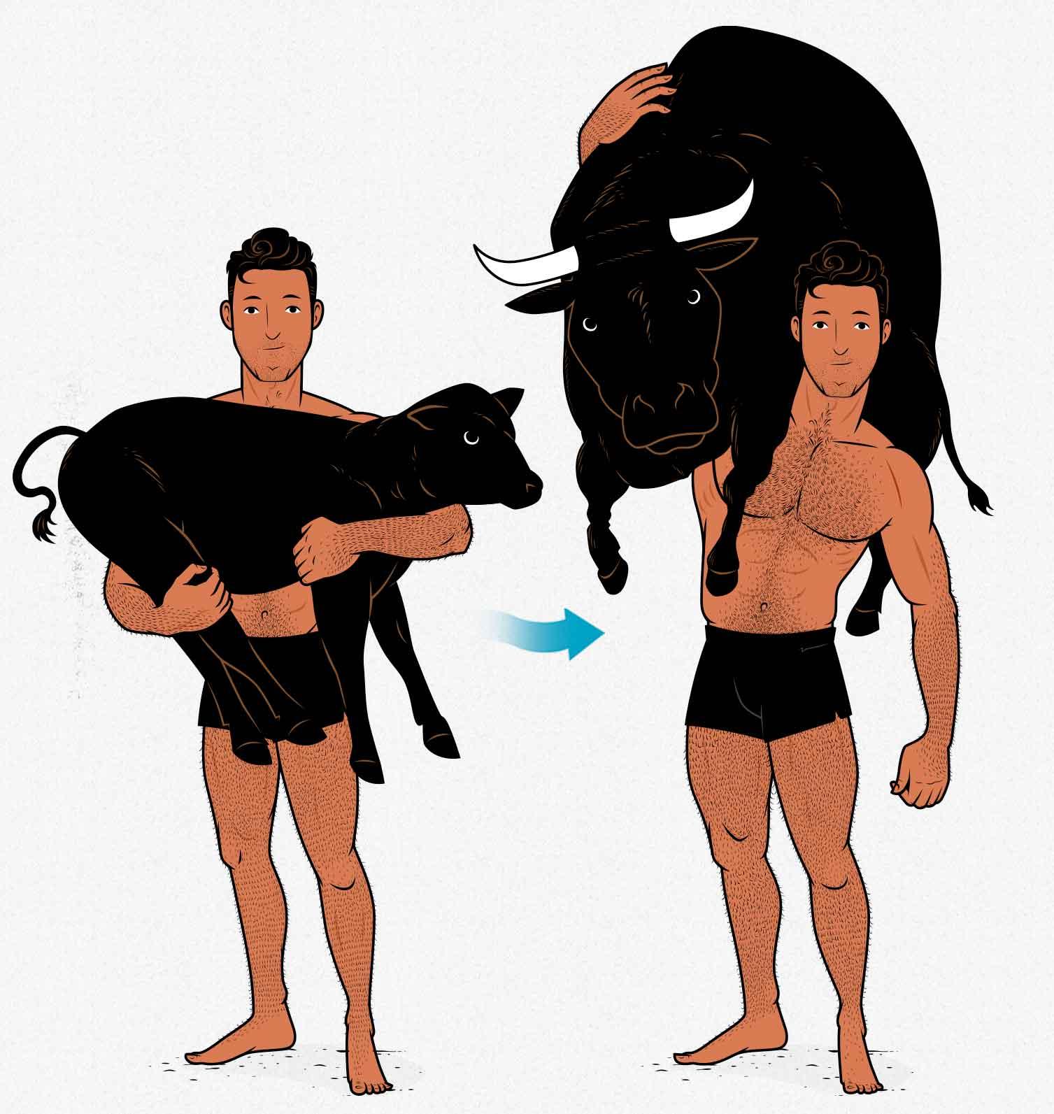 Milo of Croton lifting a calf that grows into a bull, illustrating the principle of progressive overload.