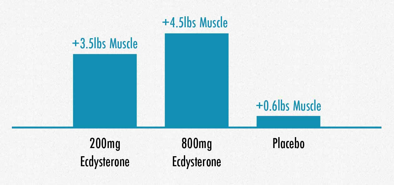 One study found increases in muscle mass from supplementing with ecdysterone.
