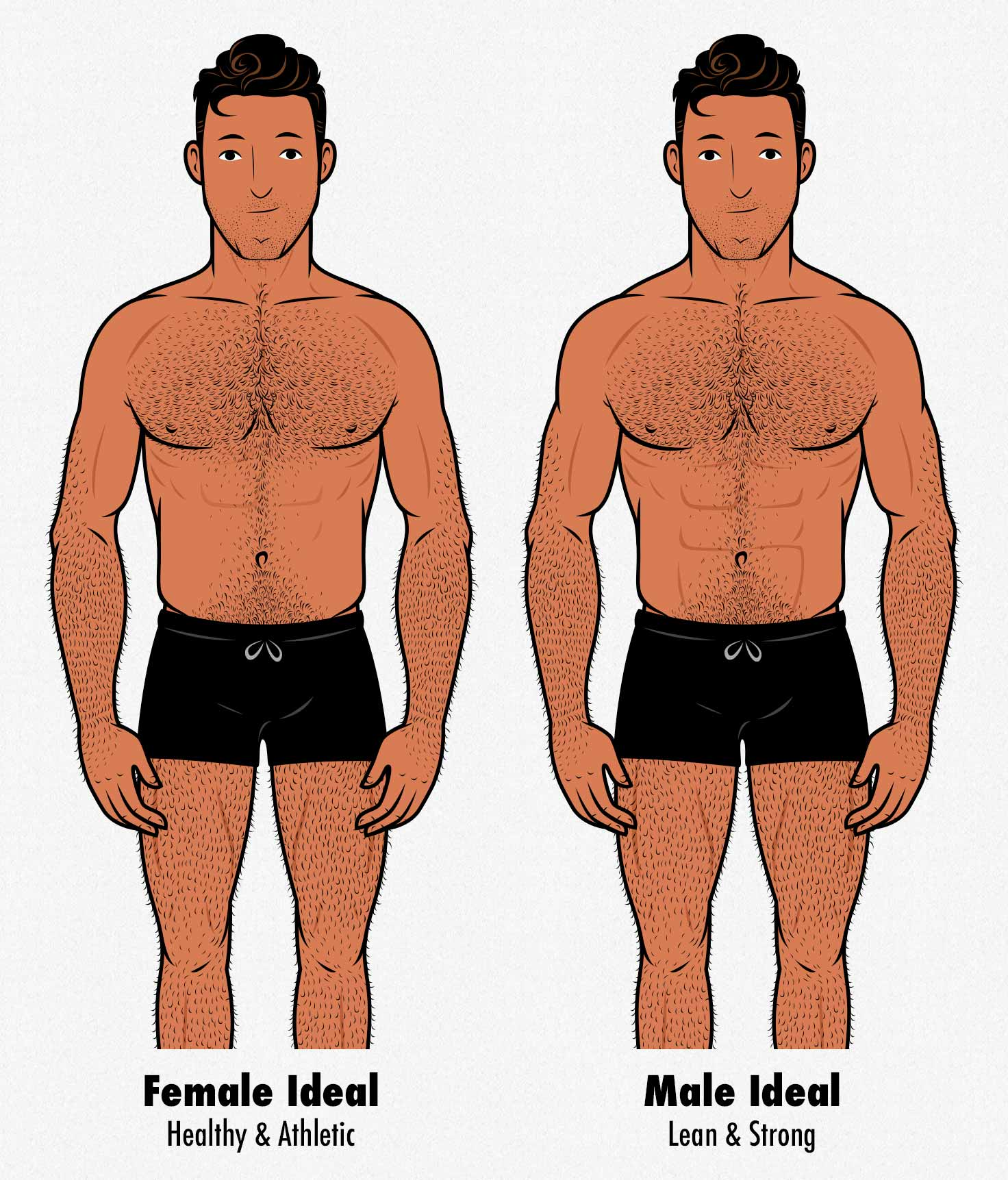 Illustration showing the bodies rated as most attractive by women and ideal by men.