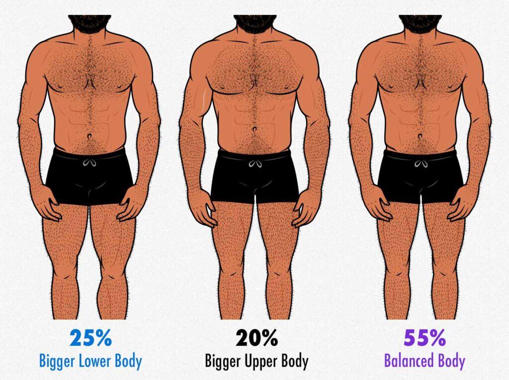 Illustration showing upper-body vs leg proportions in men.